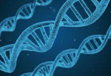 Codice autodistruzione cellule tumorali