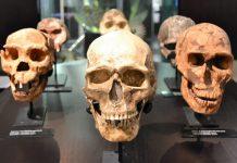 Lo hobbit delle Filippine: nuova specie umana getta luce sulla storia dell'uomo