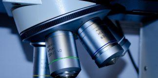 Le cellule staminali cerebrali sopravvivono al trapianto senza farmaci anti-rigetto