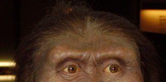 Australopithecus anamensis: ricostruito il volto dell'antenato di Lucy