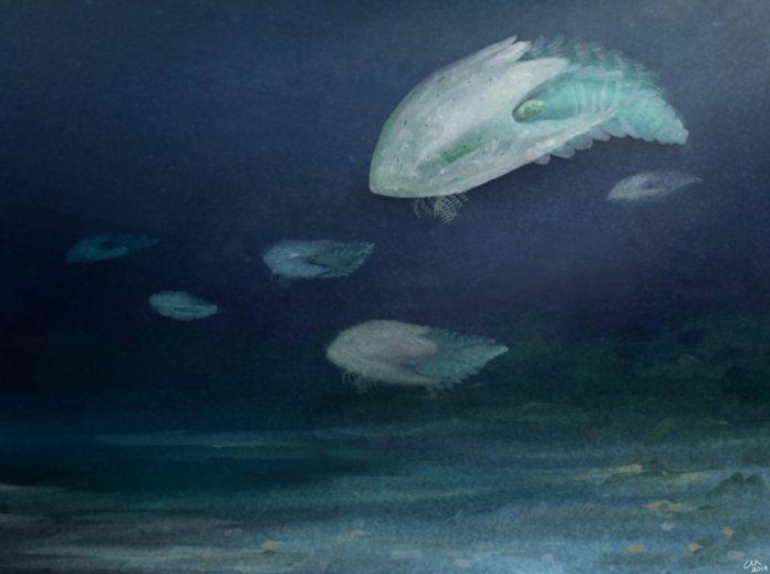 Cambroraster: una nuova specie di predatore vissuta nel Cambriano