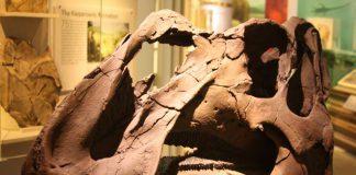 Aquilarhinus: una nuova specie di dinosauro a becco d'anatra