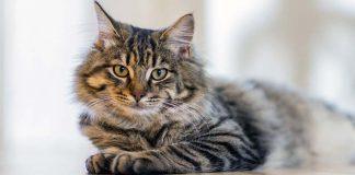 Due gatti soli in un appartamento a 1500 dollari al mese