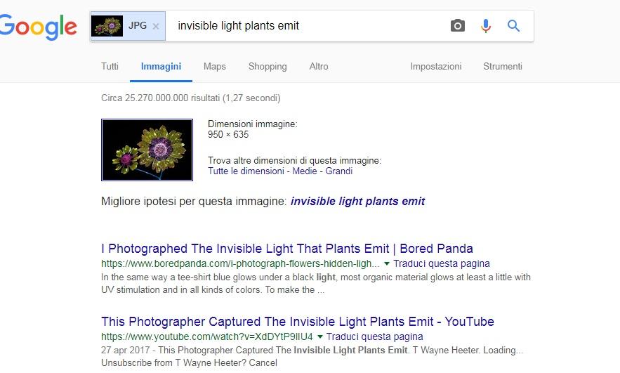 immagini ricerca tramite url