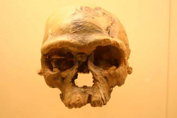 Homo sapiens: scoperti i più antichi resti fuori dall'Africa