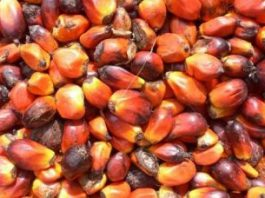 Olio di palma: il pomo della discordia