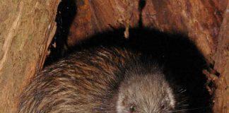 Nuova Zelanda: perduti 50 milioni di anni di biodiversità