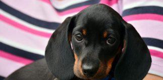 Alimentazione del cane: cosa è importante sapere?