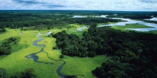 Gli alberi in Amazzonia si producono la pioggia da soli