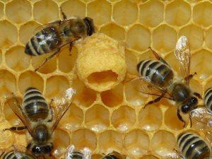 api africanizzate