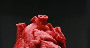 Cuore stampato in 3D: bimbo di 14 mesi salvo