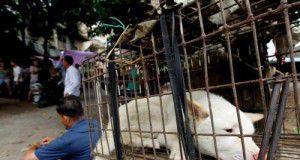 Cina: a Yulin anche quest'anno il festival dei cani per il solstizio d'estate