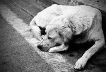 Si avvicinano le vacanze: NO all'abbandono dei nostri Amici Animali