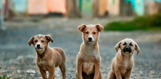 Nomi per cani maschi e cani femmine