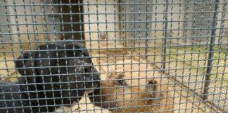 """Canili romani: la vittoria della associazioni animaliste contro la delibera """"ammazzacanili"""""""