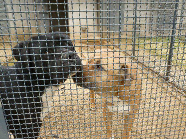 Canili romani: la vittoria della associazioni animaliste contro la delibera