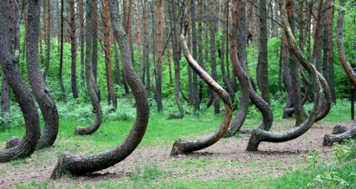 Il segreto della misteriosa foresta di crooked