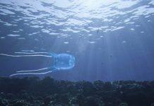 Bambina italiana uccisa da una medusa nelle Filippine