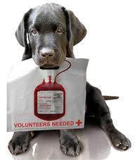 Una banca del sangue anche per cani e gatti