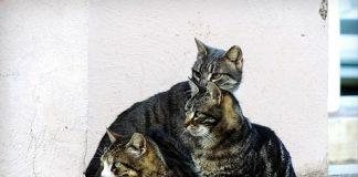 Colonia felina: i gatti anche in condominio