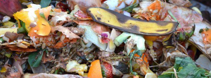 Allevamenti di scarafaggi per i rifiuti