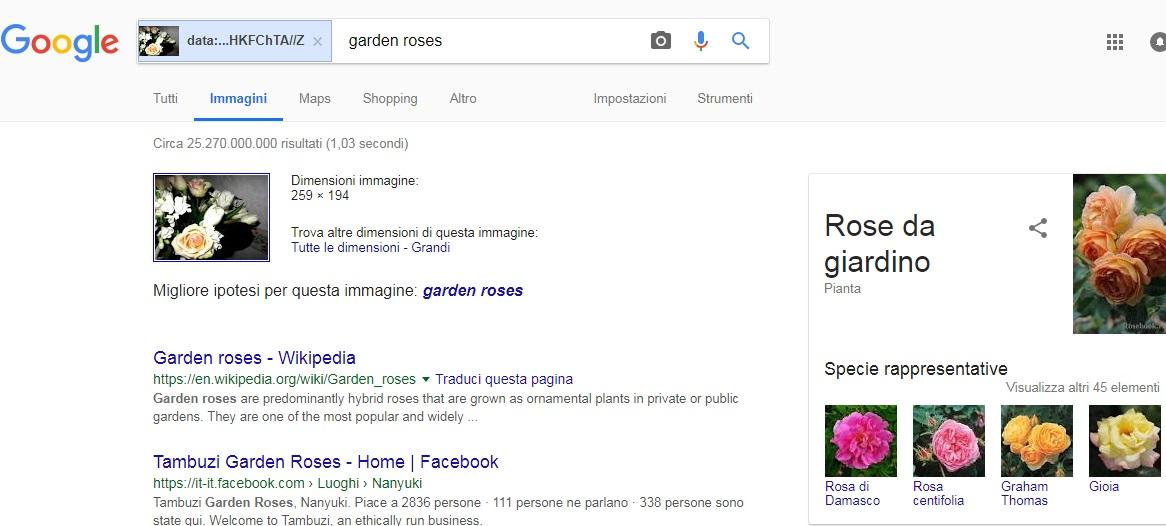 immagini-cerca-google