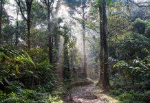 Amazzonia in fiamme: il polmone del pianeta terra a rischio