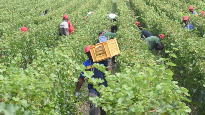 Latina: migranti sfruttati nei campi