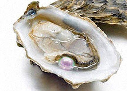 La fortuna bacia anche a cena: apre un'ostrica e trova 5 perle