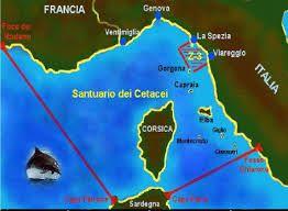 Unione Europea supporta la realizzazione del Santuario dei cetacei italiano