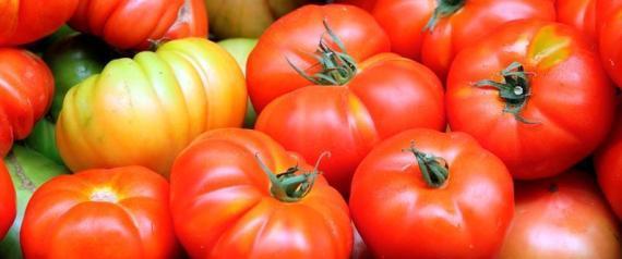 Ecco il super pomodoro: un carico di antiossidanti pari a 50 bottiglie di vino