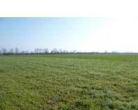 Ismea: terreni agricoli ed agevolazioni