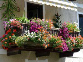 Terrazzi fioriti: le piante da scegliere