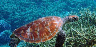 Decine di tartarughe sono nate sulla spiaggia a Meta di Sorrento