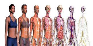 Nuova sfida per Google: una mappa del corpo umano