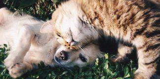 Covid-19: cani e gatti fonte di contagio. Sfatiamo questo mito