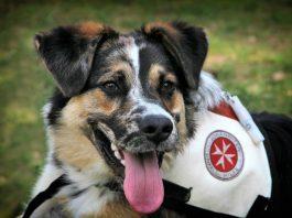 I cani possono salvarci dai pericoli ma test universitari approfondiscono la loro natura